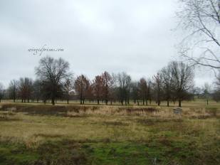 golf course - do they play on the brown rather than the green?