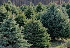 commercial tree farm