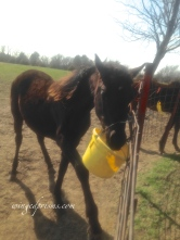 This little guy was my buddy. The bucket kept moving while he ate. So.....