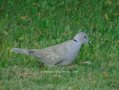 a dove came to visit