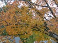 Autumn on my street