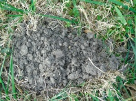 just a mole hill - don't make a mountain out of it